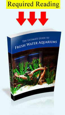 Freshwater Aquarium Guide eBook Cover